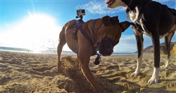 GoPro Fetch - Dog Harness